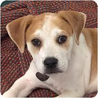 Adopt A Pet :: Mason - Ithaca, NY