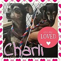 Adopt A Pet :: Charli - Plainfield, IL
