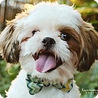 Adopt A Pet :: Frankie - Nashville, TN