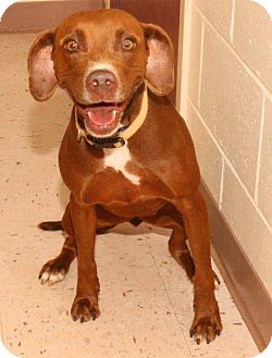 Pointer Mix Dog for adoption in McDonough, Georgia - P-Hazel