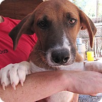 Adopt A Pet :: S1001-K  Gabby - Bay Springs, MS