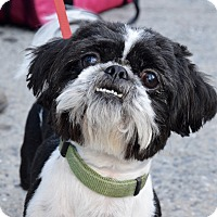 Adopt A Pet :: Oscar! - New York, NY