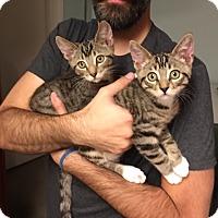 Adopt A Pet :: Sage - Pasadena, CA