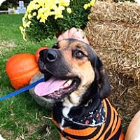 Rottweiler/Hound (Unknown Type) Mix Dog for adoption in Mooresville, North Carolina - Franklin