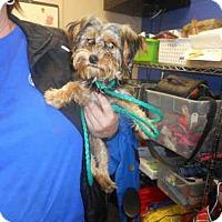 Adopt A Pet :: A605703 - Louisville, KY