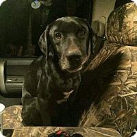 Adopt A Pet :: Scout - Matawan, NJ