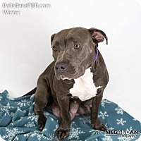 Adopt A Pet :: Winter - Southampton, PA
