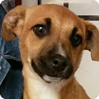Adopt A Pet :: Princess Hamidou - Lexington, KY
