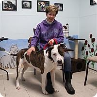 Adopt A Pet :: Jill - Elyria, OH