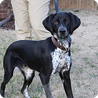 Adopt A Pet :: Mario **PENDING ADOPTION** - Columbia, TN
