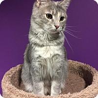 Adopt A Pet :: Autumn - Herndon, VA