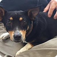 Adopt A Pet :: SAHARA - San Antonio, TX