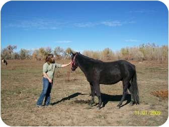 Mustang/Pony - Other Mix for adoption in Pueblo, Colorado - Dreamer