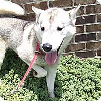 Adopt A Pet :: Roxy - 9 months - Augusta County, VA