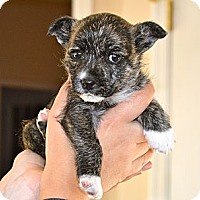 Adopt A Pet :: Bianca - Homewood, AL