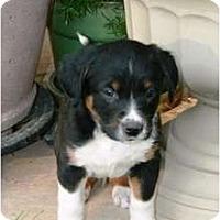 Adopt A Pet :: Dempsey - Richmond, VA
