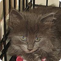Adopt A Pet :: PEARL - 2013 - Hamilton, NJ