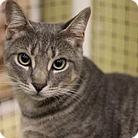 Adopt A Pet :: Maus - Alexandria, VA