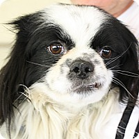 Adopt A Pet :: Spot - san diego, CA