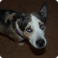 Adopt A Pet :: Dakota~PENDING - Raritan, NJ