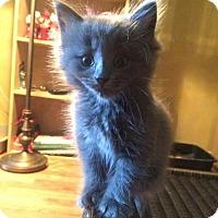 Adopt A Pet :: Yarrow - Hamilton, ON