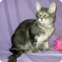 Adopt A Pet :: Dexter - Powell, OH