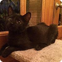 Adopt A Pet :: Flynn - Nesbit, MS