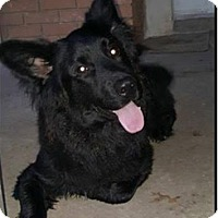 Adopt A Pet :: Romeo-pending adoption - East Hartford, CT