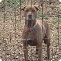 Adopt A Pet :: Snickers - West Columbia, SC