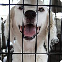 Adopt A Pet :: HARRIET - Pine Grove, PA