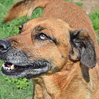 Adopt A Pet :: Flash - Iola, TX