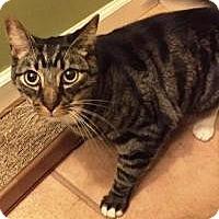 Adopt A Pet :: Pretty Boy (Wizard) - Medford, NJ