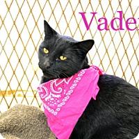 Adopt A Pet :: Vader - Hamilton, MT