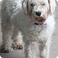 Adopt A Pet :: Rose Marie - Meet me! - Woonsocket, RI