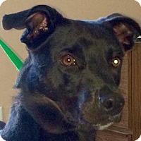 Adopt A Pet :: Koda - MINNEAPOLIS, KS