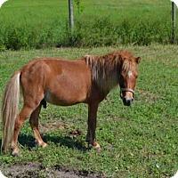 Adopt A Pet :: *OLIVER - Ocala, FL