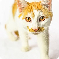 Adopt A Pet :: Mustachio - Oxford, MS