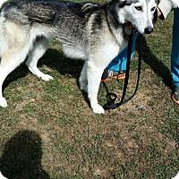 Adopt A Pet :: Angelica - Bristol, VA