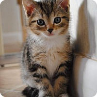 Adopt A Pet :: Luna - Adoption Pending - Rustburg, VA