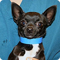 Adopt A Pet :: Crosby - Wildomar, CA
