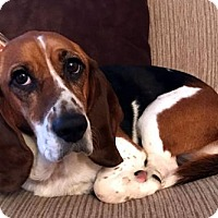 Adopt A Pet :: RYDER - Pennsville, NJ