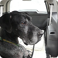 Adopt A Pet :: Gabe - Manassas, VA