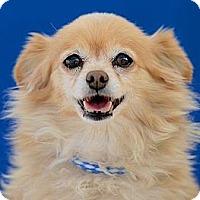 Adopt A Pet :: Lola - Lodi, CA