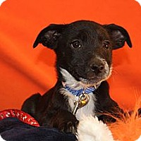 Adopt A Pet :: Knowshon - Broomfield, CO