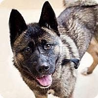 Adopt A Pet :: Maddie - Hayward, CA