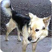 Adopt A Pet :: Trip - Scottsdale, AZ