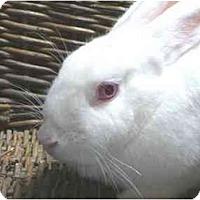 Adopt A Pet :: Fujiko - Newport, DE