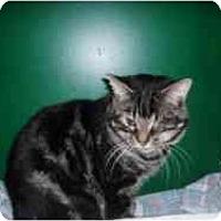 Adopt A Pet :: Travis - Hamburg, NY