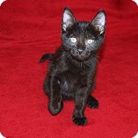 Adopt A Pet :: Isabella - Jackson, MS