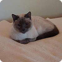 Adopt A Pet :: Simon - Pinckney, MI